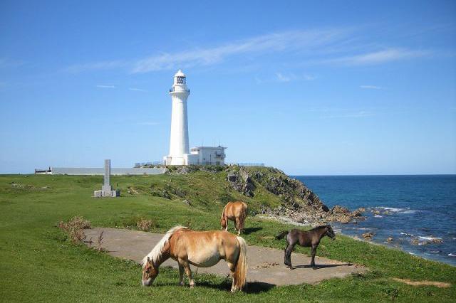 下北半島最東端にある尻屋崎と寒立馬
