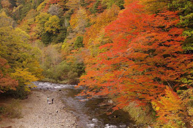 散策や温泉も楽しめる紅葉の名所、薬研(やげん)渓流